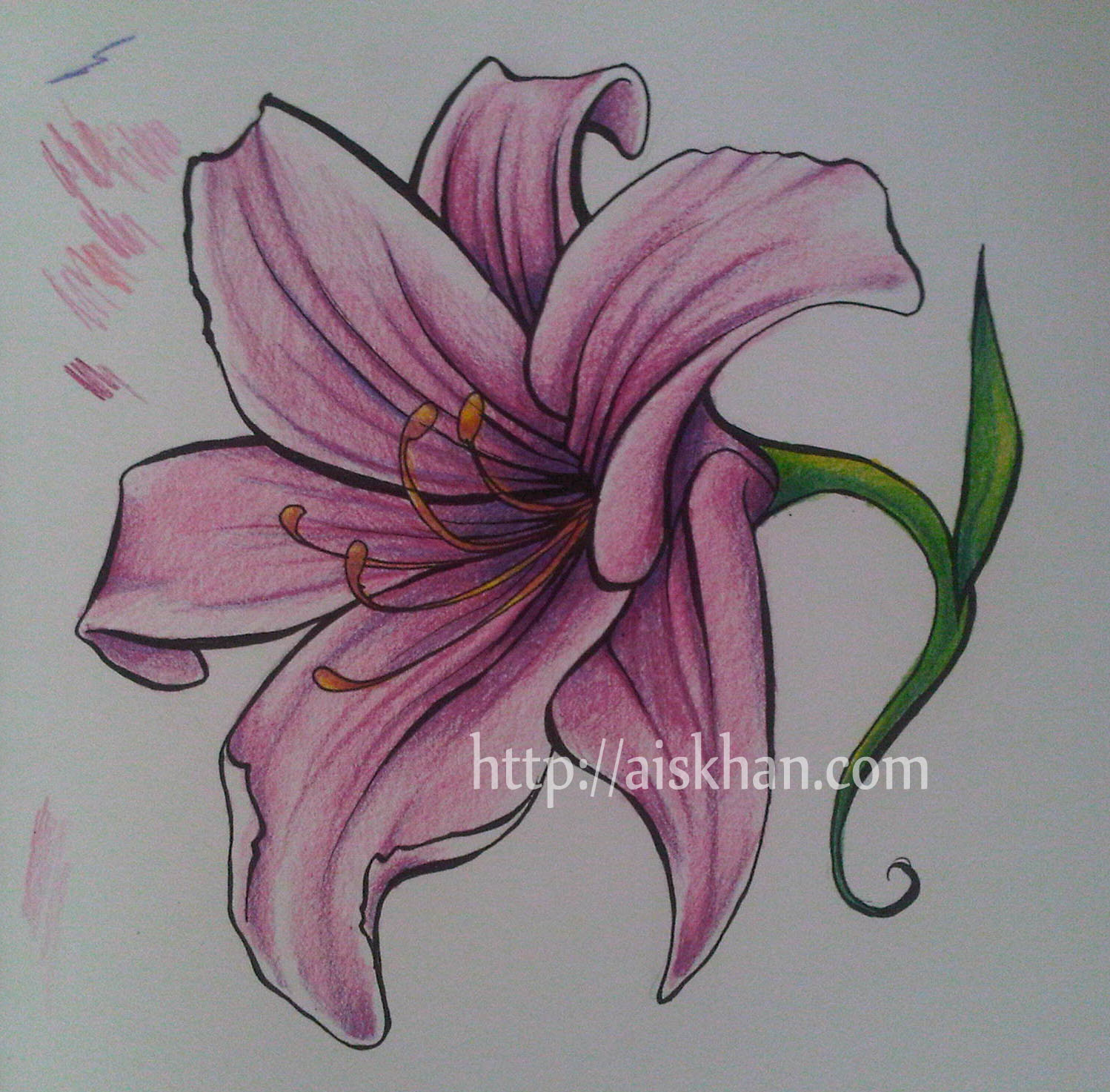 Uncategorized Drawing Of Lily lily ayesha khan